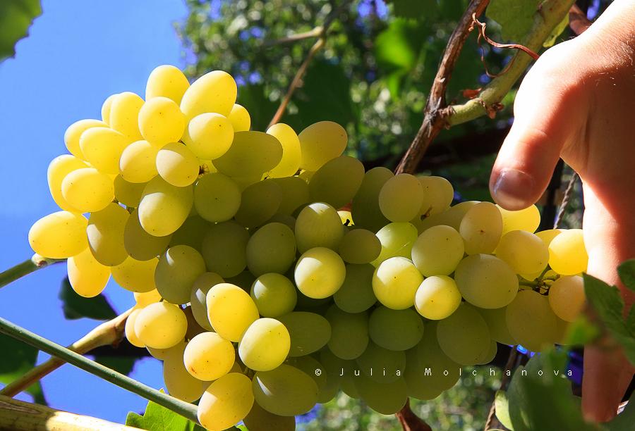 good summer_good vine